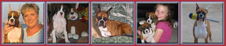 Telstar Boxers-California boxer breeder-quality show and pet boxer puppies