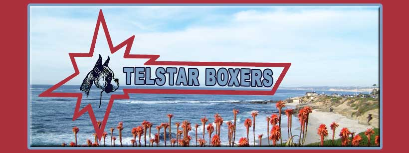 Telstar Boxers home page logo